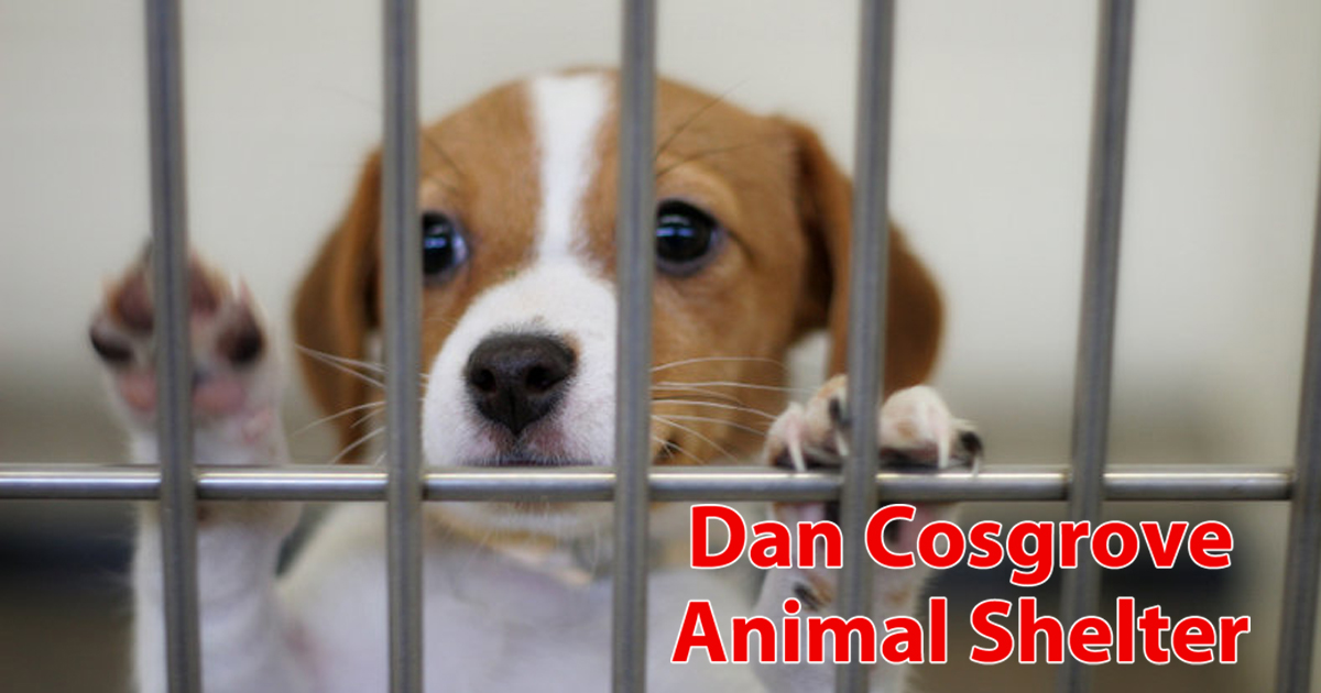 Cosgrove Animal Shelter